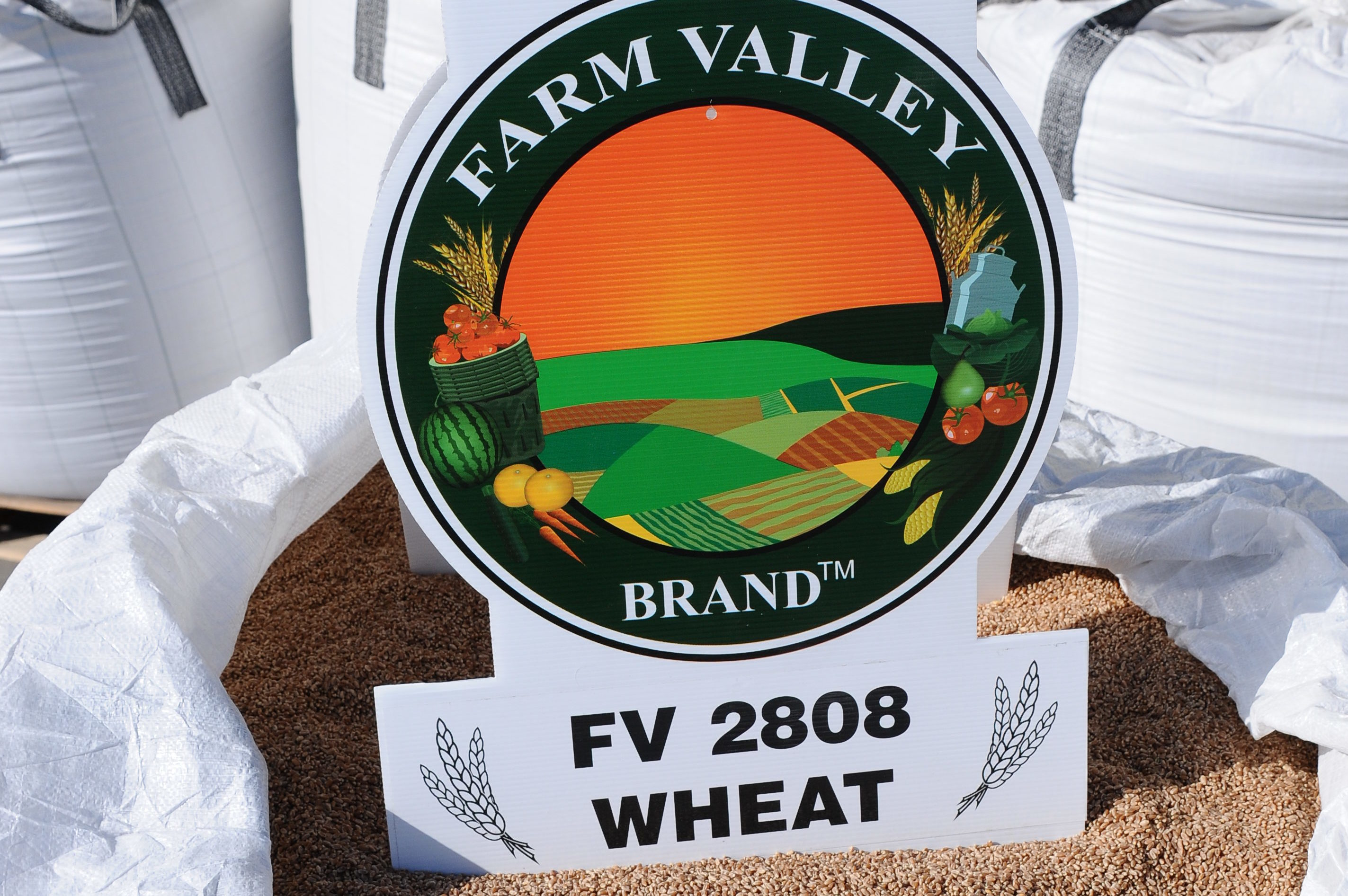 FV 2808 Wheat